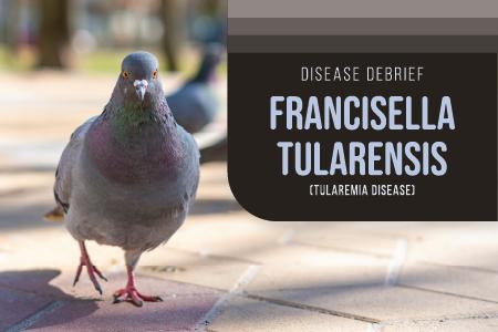 Francisella tularensis (Tularemia Disease)